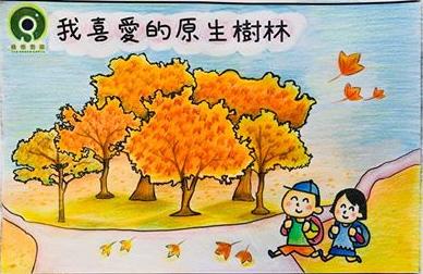 許樂媛 | 最喜愛的原生樹種: 楓香